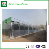 Serra di vetro intelligente per la piantatura moderna di agricoltura