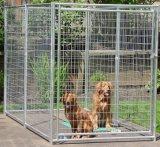 Порошок покрыл псарню собаки, бег собаки, клетку собаки, загородку собаки для сбывания