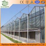 Venta caliente Multi-Span Climatización Sistemas de Agricultura Glass Venlo Greenhouse