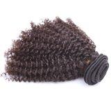 I capelli umani all'ingrosso possono essere concentrazione e le migliori vendite tinte in capelli umani Jerry del salone di capelli riccio