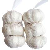 Aglio bianco normale del nuovo raccolto (5.0cm ed aumentano)