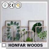 Blocco per grafici di legno naturale dell'esemplare della pianta per la decorazione dello studio