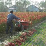 4HP Machines agricoles de Chilli Reaper