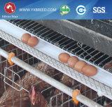 Las aves de corral enjaulan para los pollos de la capa