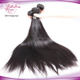 バージンの毛のもつれの自由で膚触りがよくまっすぐなマレーシアの毛