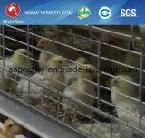 H-Type cage de couche de poulet pour le grilleur avec les systèmes automatiques