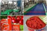 高速缶詰にされたトマトソース及びケチャップ満ちるライン