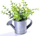 훈장을%s 철 급수 깡통에 있는 로즈메리 또는 돈 잎을 무리를 짓기의 인공적인 종류