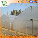 농업을%s 갱도 또는 단 하나 경간 다중 경간 플레스틱 필름 온실 또는 온실