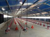 Entrepôt de structure métallique de coût bas (BYSS121807)