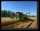 Machine automotrice de moissonneuse de cartel de blé