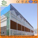Invernadero de cristal templado de la alta calidad con alta transparencia