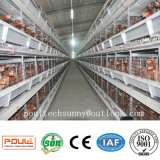Sistema automático da gaiola da galinha da camada com sistema da coleção dos ovos