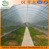 Garantía de 10 Años Tubo Galvanizado Caliente China Agricultura Barata de la Película Único Invernadero del túnel del acoplamiento