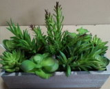 Migliori piante artificiali di vendita di Gu-SD-15106 succulente