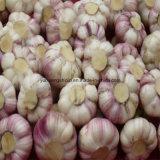 Чеснок китайского нового урожая нормальный белый, красный чеснок