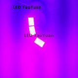 Soluciones UV Lámpara de curado 365nm 100W