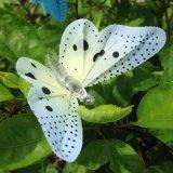 Luzes solares da corda da borboleta da fibra óptica