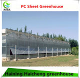 Tunnel économique de l'agriculture Maison verte pour la culture des légumes