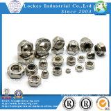 Noix de nylon de l'acier inoxydable 316