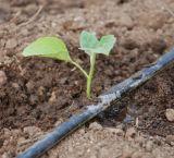 Fertilizante do potássio do ácido Humic de fertilizante orgânico