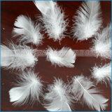 Gewaschene weiße Gans-Feder und unten