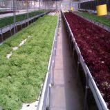 Système hydroponique de Nft de Chambres vertes