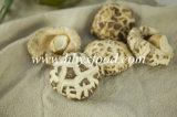 Fungo di Shiitake secco con il bastone (fiore bianco)