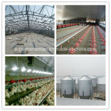 Steel Structure Poultry Farm et Full Set Poultry Equipment