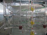 H datilografa a gaiola automática da grelha do equipamento das aves domésticas