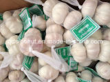 Neues Crop Fresh Normal White Garlic 3p/10kg Bag oder Carton