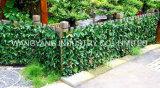 Bella parete personalizzata popolare della pianta sempreverde