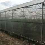 Greenhouse를 위한 UV Protection Plastic Mosquito Nets