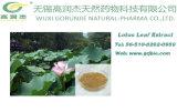 Extrait Nuciferine de lame de lotus de perte de poids