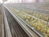 يحبس نوع فرخة دجاجة تجهيز لأنّ دجاجة عصافير مزرعة