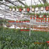 Serra sottoposta agli UV del fiore, serra dell'azienda agricola per uso commerciale
