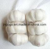 Garlic/4.5cm fresco; 5.0cm; 5.5cm ecc