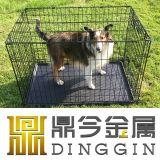 [هوت-سلّينغ] [فولدبل] [بت دوغ] مربى كلاب مع [أبس] صينية