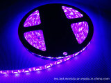 Estilo decorativo colorido 5054 IP65 impermeável S Style Flexible LED Strip