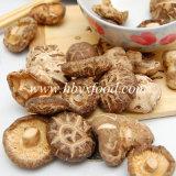 茶カラーストリップを持つ確実で自然な野生の乾燥された椎茸きのこ