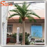 Grand palmier personnalisé de palmier de décoration de noix de coco de fibre de verre artificielle d'intérieur artificielle de palmier
