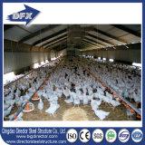 Uso rápido da galinha da construção e casa lateral aberta das aves domésticas