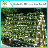Surtidor hidropónico de la casa verde de la película para el establecimiento vegetal de la flor