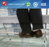 Automática H Frame Galvanized Steel High-Top Layer Chicken Poultry Farms Equipment