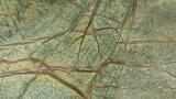 استوائيّة [رينفورست] اللون الأخضر رخام سعر, رخام أخيرة