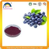 Pó natural puro do concentrado do extrato da uva-do-monte