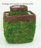 Planteur vert de jardin de grand dos de mousse