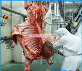 가금 집에서 육류 처리에 있는 Slaughtering 선