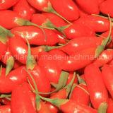 Commercio all'ingrosso a secco organico Goji della frutta di Goji della nespola