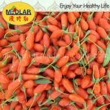 Frucht organische Goji Beere Mispelbarbary-Wolfberry